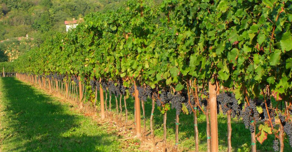 L'Antico Broilo : Prepotto per Eurovinum, il Paesaggio della Vite e del Vino